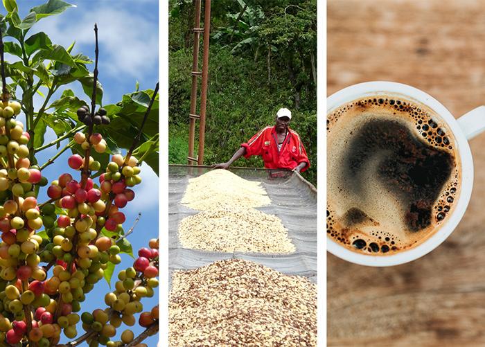 FSS_Coffee_Supply_chain